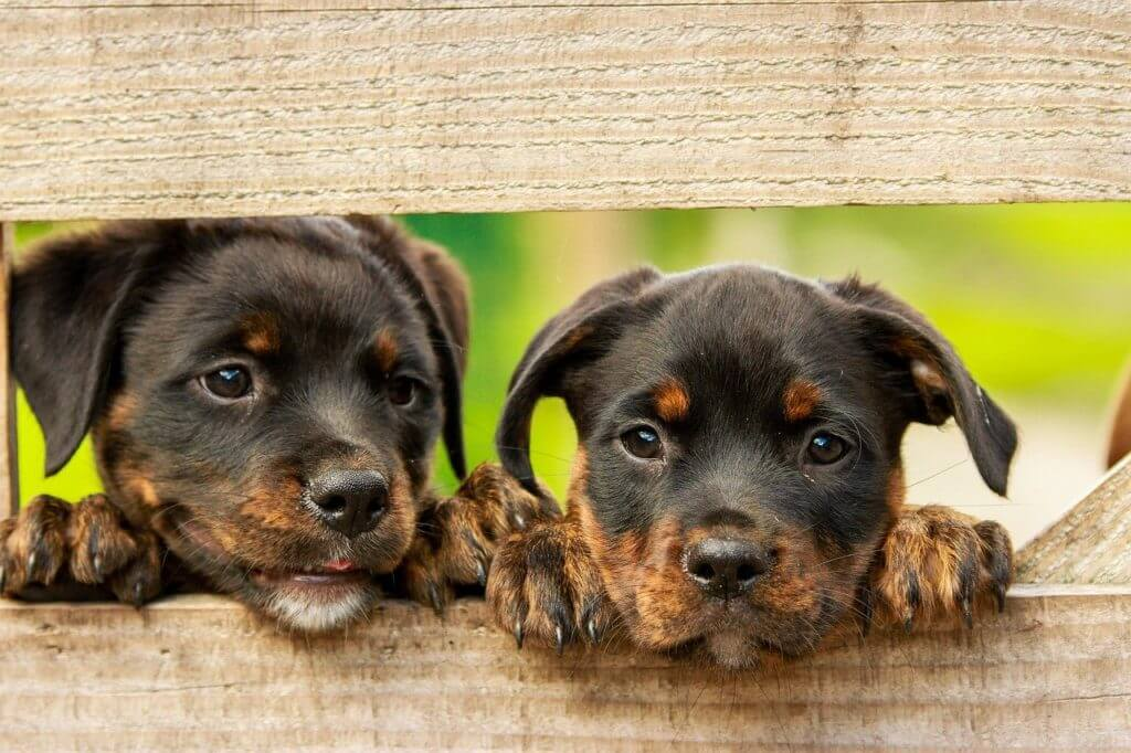 Can Dogs And Cats Breed Successfully?