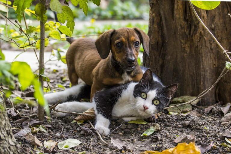 Can Dogs And Cats Get Along?