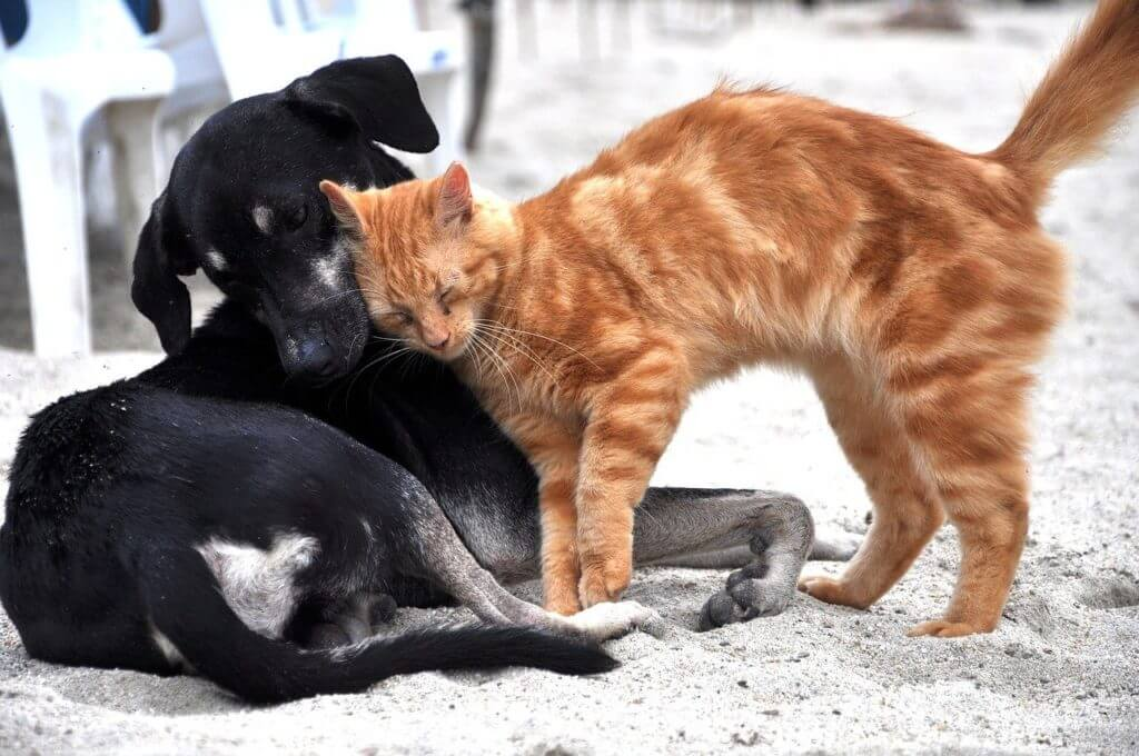 Introducing Cats And Dogs To Each Other