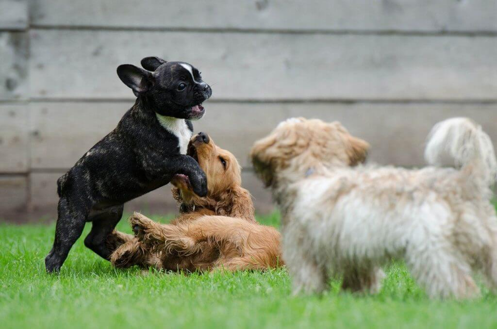 Socialization Period For Puppies And Kittens