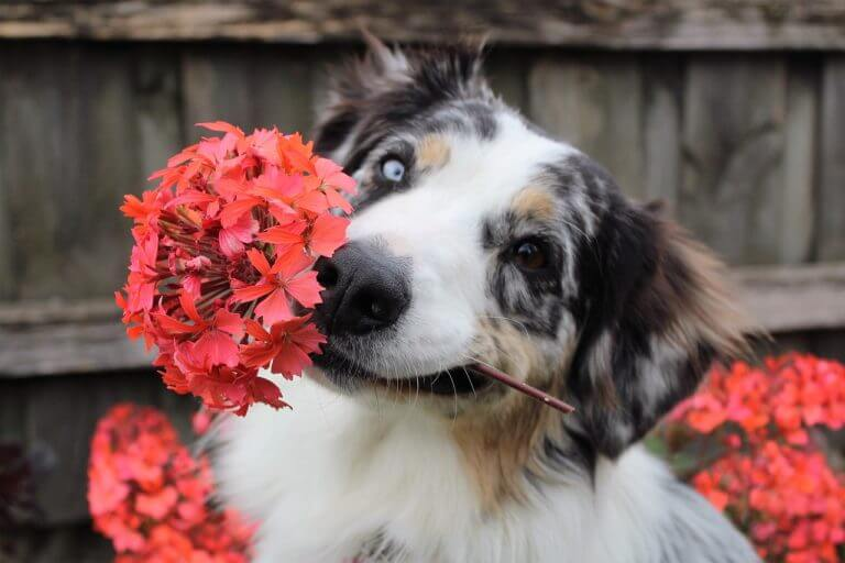 Can Dogs Get Hay Fever?