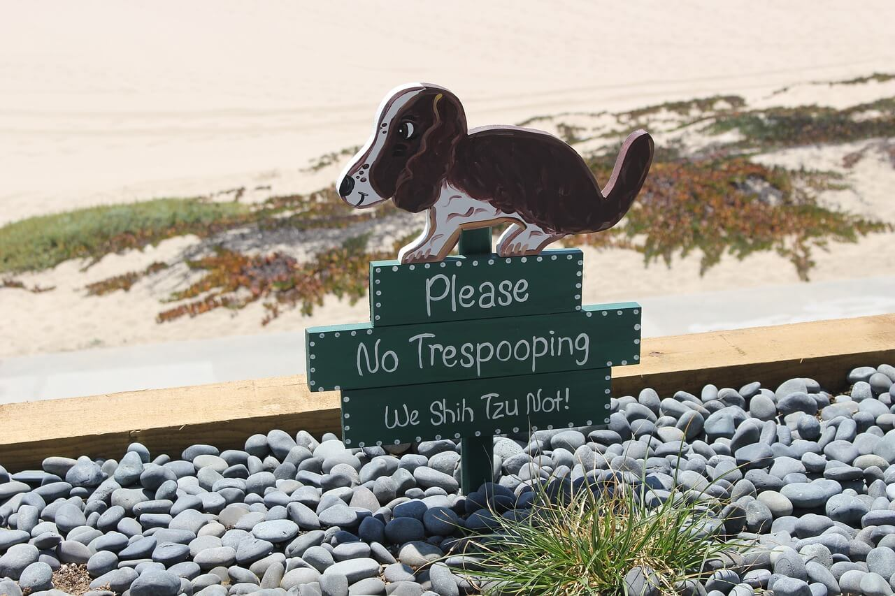 Can Dogs Wear Diapers?