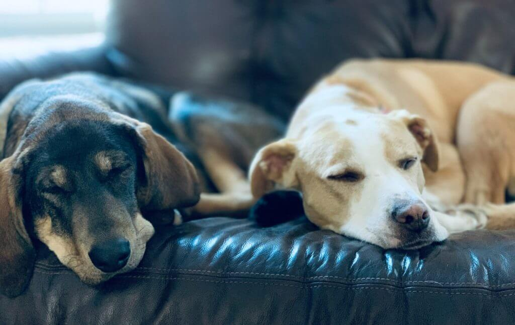 How Do Dogs Feel When You Bring Home A New Dog?