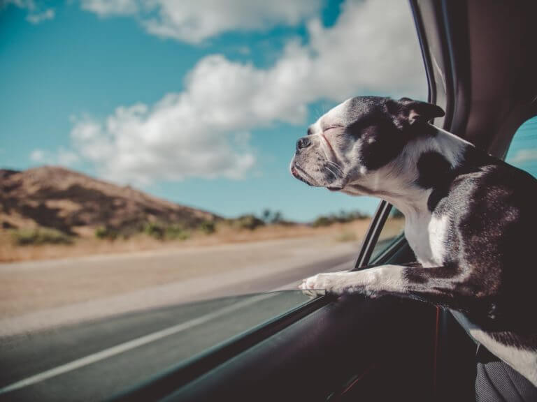 How Long Can My Dog Travel In A Car?