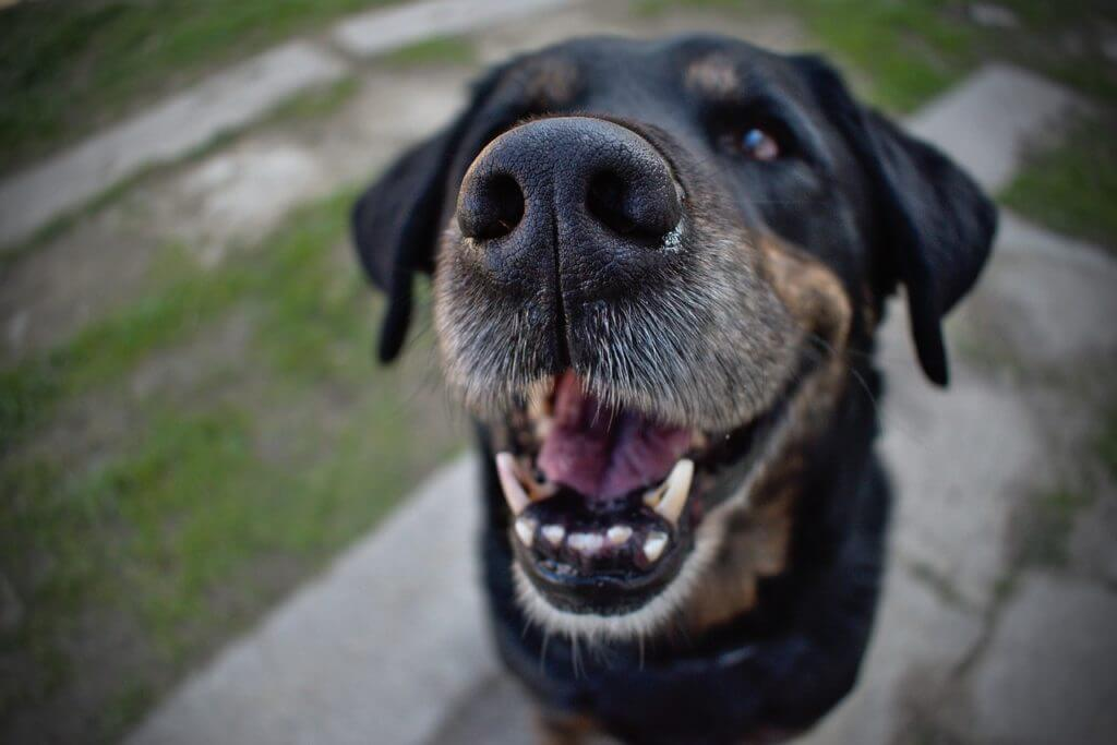Is Plaque Bad For Dogs?