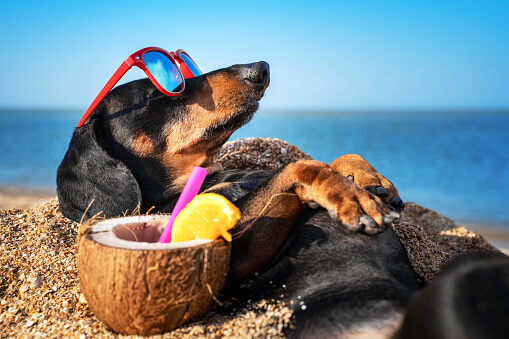 Is The Beach Safe For Dogs?