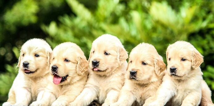 What Age Do Puppies Calm Down?