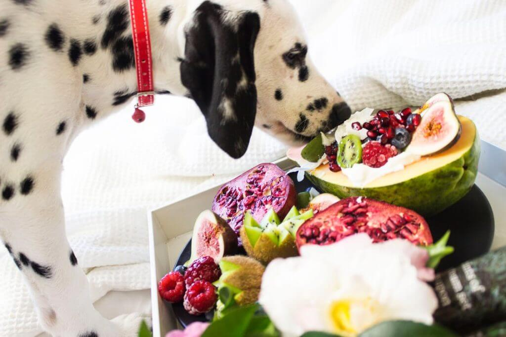 What Fruits Dogs Can And Can't Eat