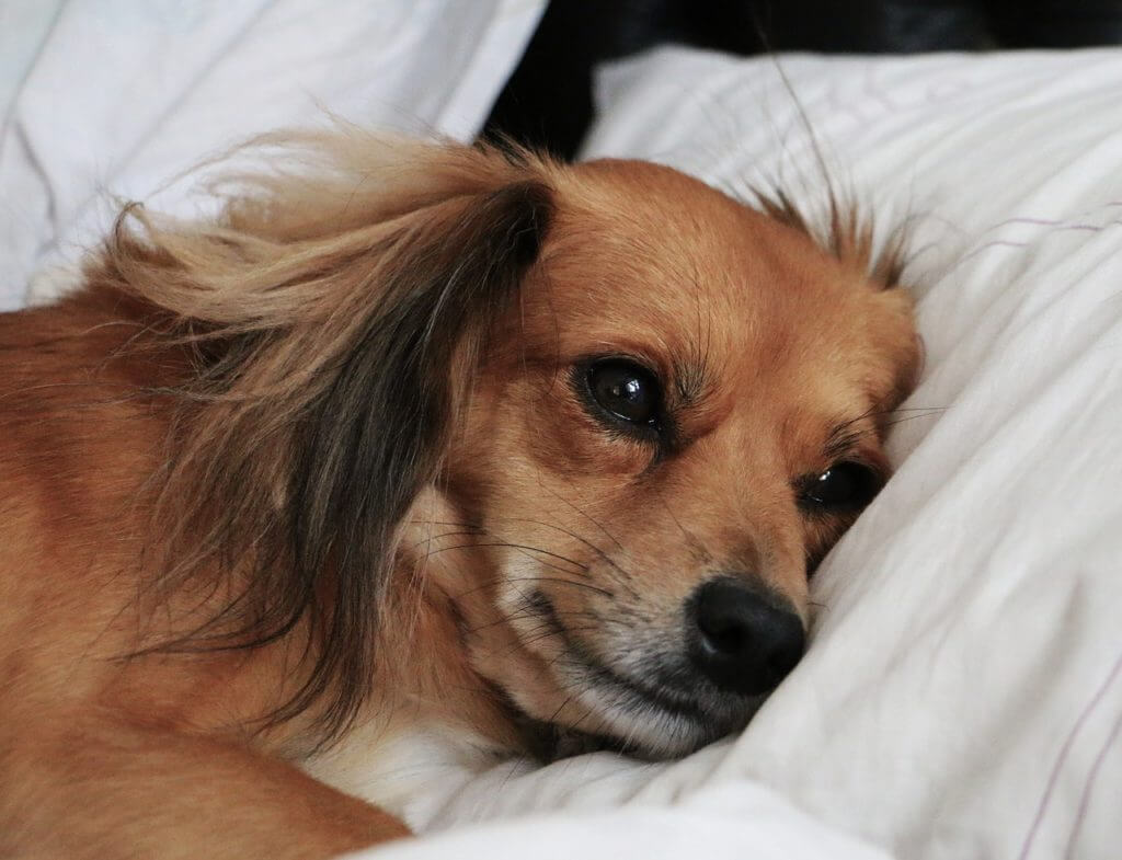 Why You Shouldn't Sleep With Your Dog