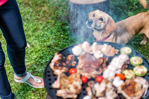 Can Dogs Eat Barbeque?