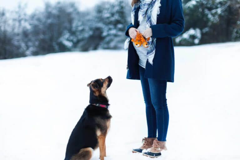 Can Dogs Tell When You're Pregnant?