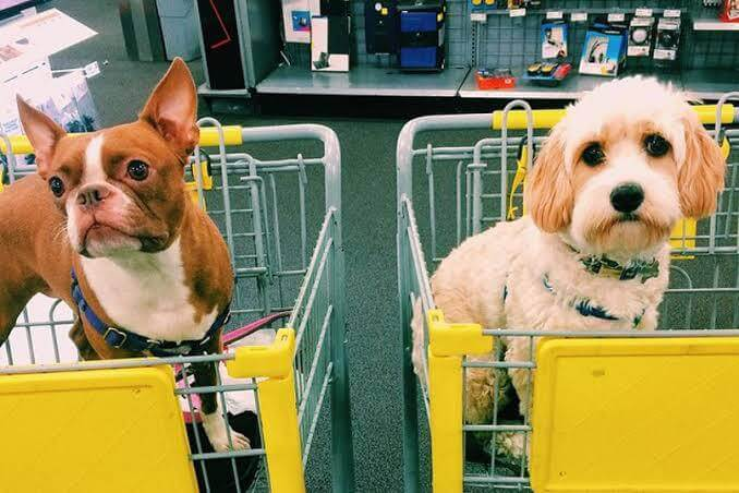 Can I take my dog to any store close by?