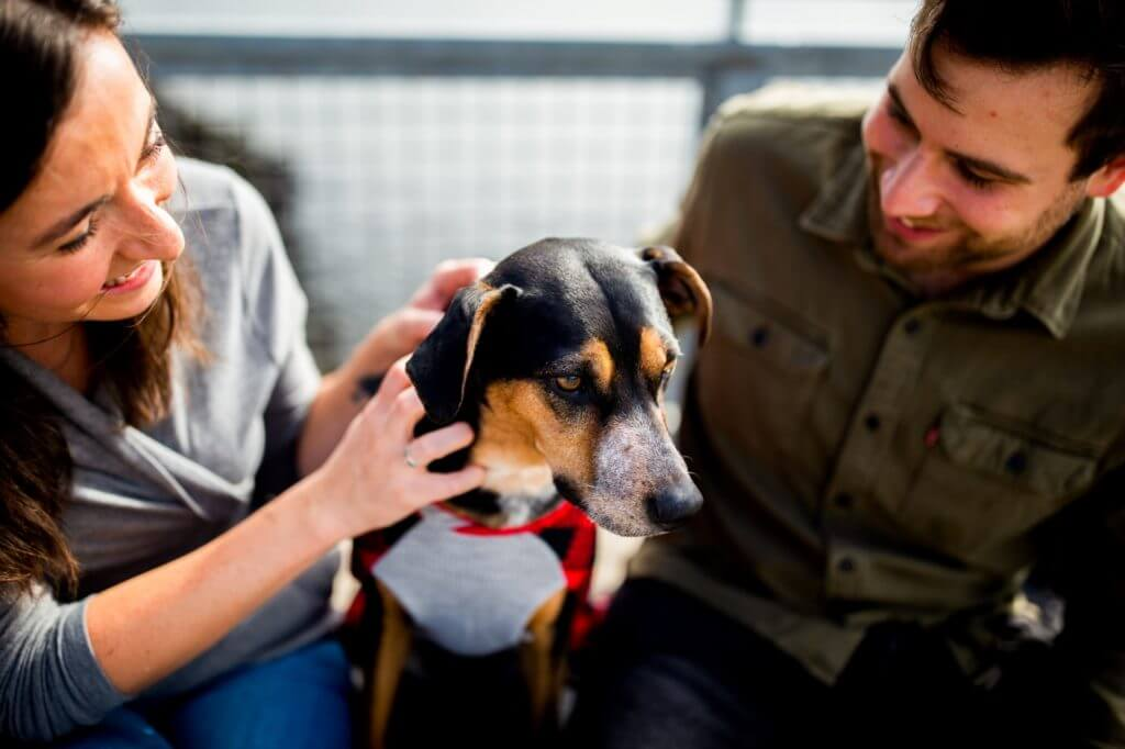 Do dogs feel unwell after vaccinations?