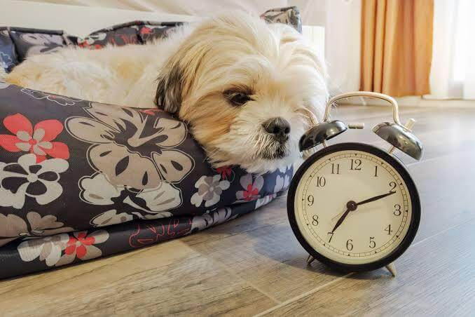 How Do Dogs Keep Track of Time?