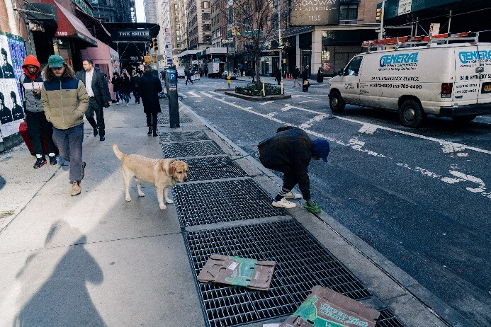 How Often Does A Dog Need To Poo?