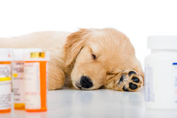 How Safe Is Paracetamol For Dogs?