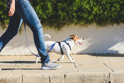 How To Know What Temperature Is Too Hot To Walk Your Dog
