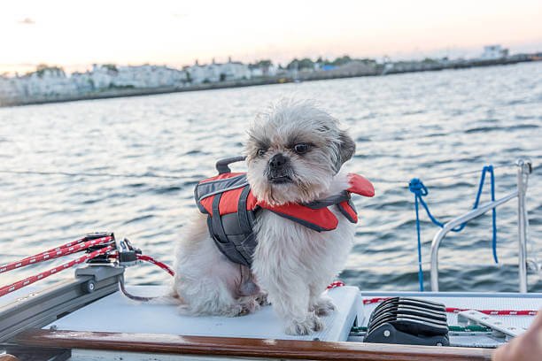 Can Dogs Go Sailing?