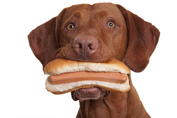 Can Dogs Have Hot Dogs?