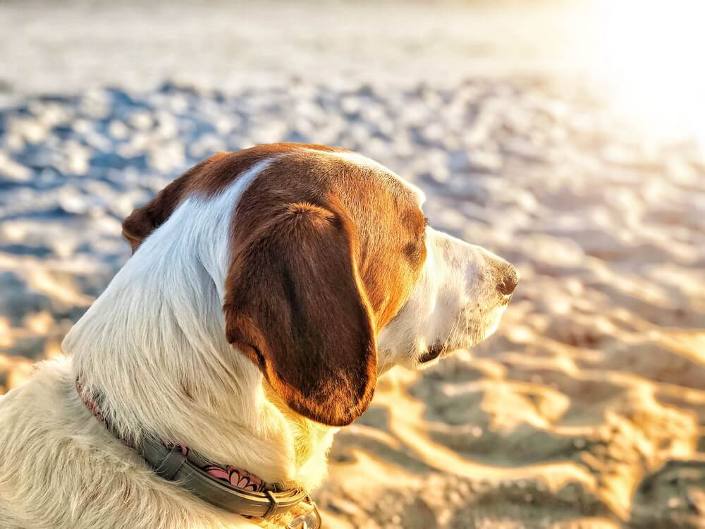 Is Human Vitamin D Dangerous For Dogs?