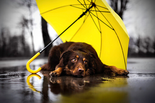 Is Rain Bad for Dogs?