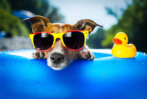 Options You Have On A Hot Day For Your Dog