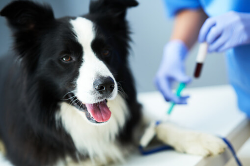 Why Do Dogs Get Sick?