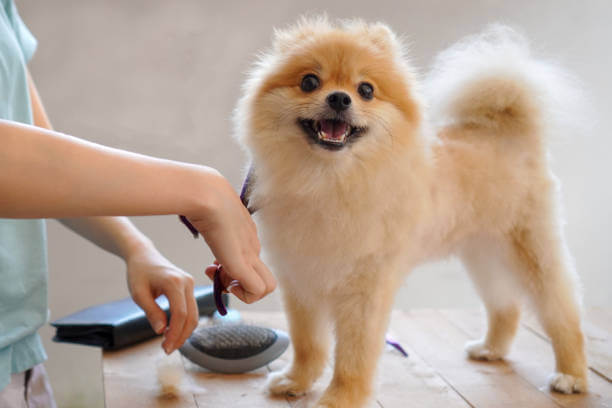 Alternatives To Haircuts For Dogs