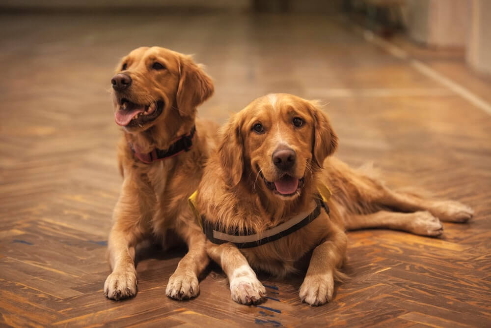 Do Dogs Remember Their Puppies If Reunited?