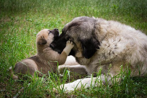 Do Mother Dogs Love Their Puppies?
