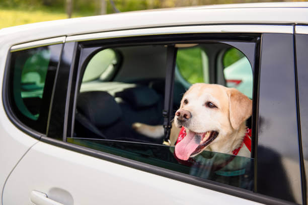Does Uber Allows Dogs?