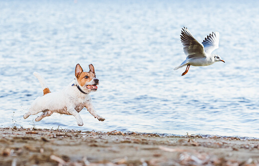 How To Stop My Dog Chasing Small Animals