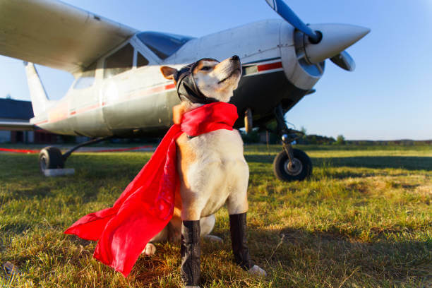 How To Train And Prepare Your Dog For A Flight