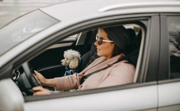 How To Train Your Dog To Travel In A Car