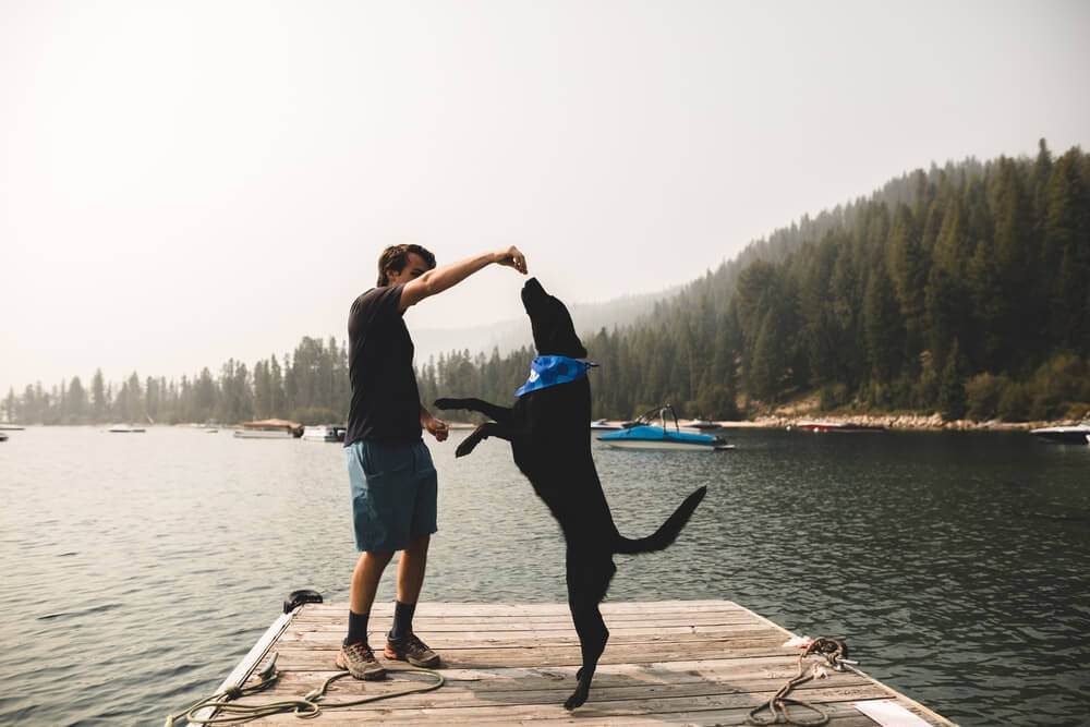Signs Your Dog Think He's Pack Leader