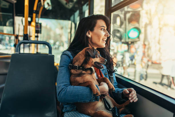 Skills Your Dog Needs To Know Before Going On Buses