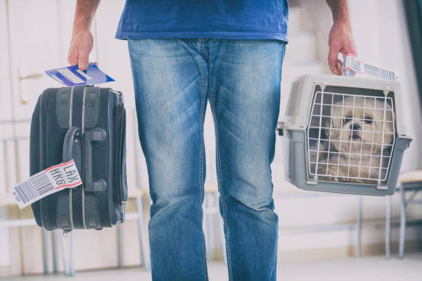 What Are The Requirements For Taking Dogs On A Plane?