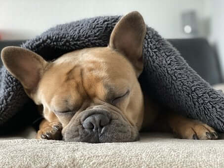 What Does Research About Dog Dreaming Say?