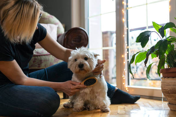 Why Do Dogs Growl When Petted?