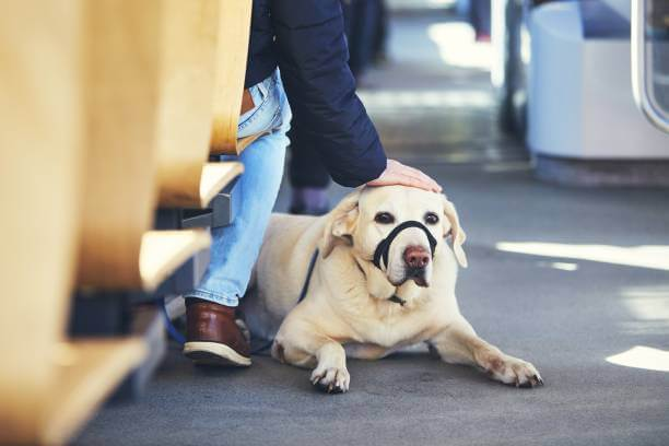 Why Travelling On Buses Isn't For Every Dog